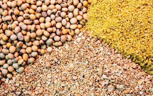 اختصاص ۴۰ درصد نهاده ها به کارخانجات تولیدی خوراک دام و طیور