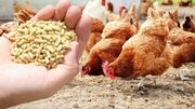 قیمت انواع نهاده های دامی و محصولات کشاورزی ۲۲ اردیبهشت ۱۴۰۰