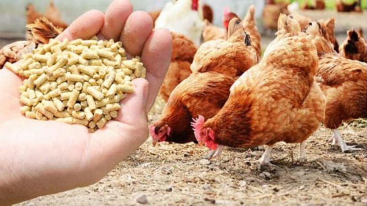 قیمت انواع نهاده های دامی و محصولات کشاورزی ۲۱ اردیبهشت ۱۴۰۰