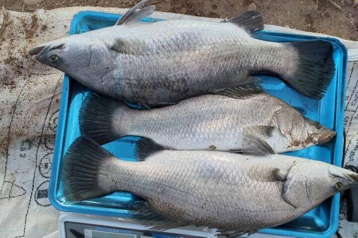 قیمت انواع ماهی در ۳ مهر ۱۴۰۰