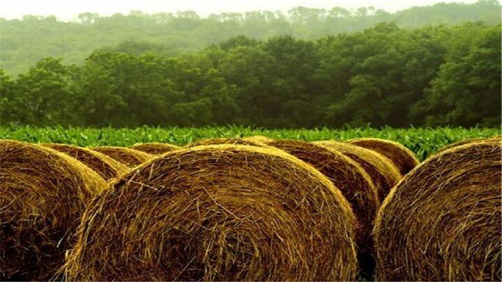 البرز وارد کننده علوفه| جهاد کشاورزی: از ۴ ماه پیش مشکلی برای تامین خوراک دام نداشته ایم