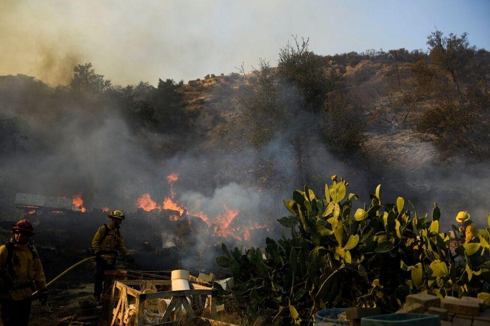 زمستان گردی آتش| جنگل ها بیگناه زغال شدند