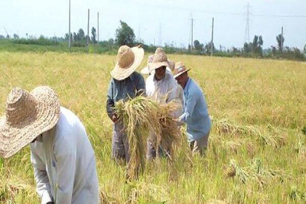 اما و اگرهای لایحه لغو معافیت مالیاتی کشاورزان؛ امنیت غذایی و تولید محصول ارگانیک
