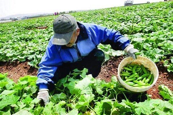 تولید محصولات گواهی شده کشاورزی در قزوین افزایش مییابد