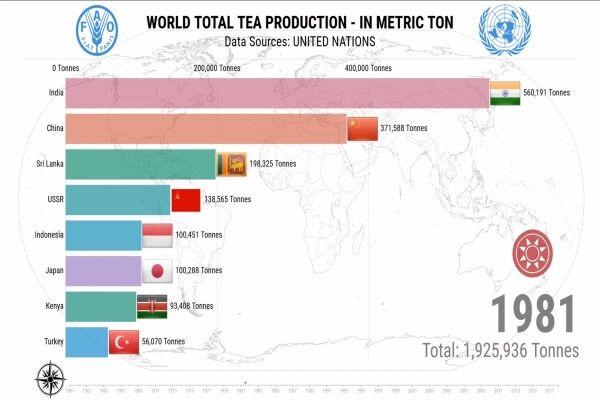 چین بزرگترین تولیدکننده چای جهان