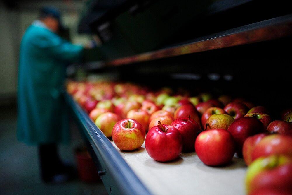 روسیه واردات سیب و گوجه فرنگی از آذربایجان را ممنوع کرد