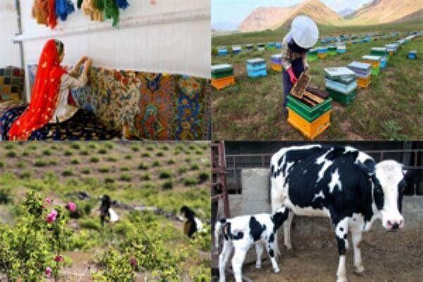 توسعه روستایی برای جلوگیری از مهاجرت؛ توانمندسازی مشاغل روستایی در اولویت است