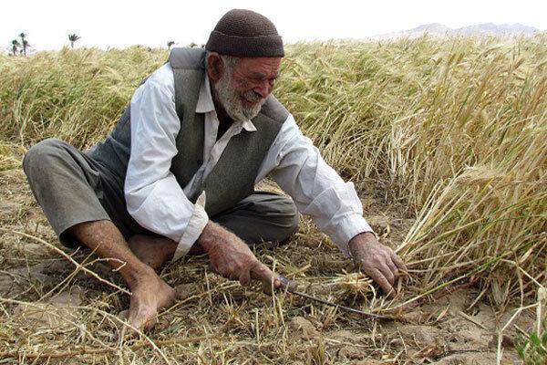 مالیات از حوزه کشاورزی سرمایهگذاران را هرس میکند؛ بازی مسئولان با امنیت غذایی
