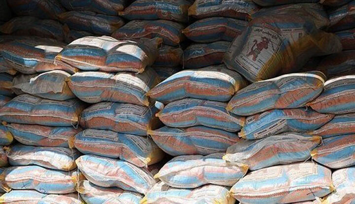 دلالان دسترنج برنجکاران شمال را به تاراج می برند