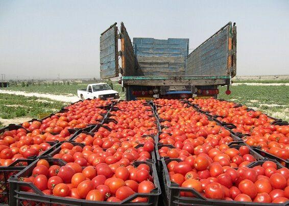 صادرات ۷۰ درصد تولیدات گلخانهای استان بوشهر به روسیه و کشورهای حاشیه خلیج فارس