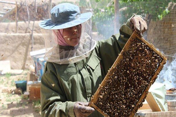 وجود ۴۹ هزار کلنی زنبور عسل در خراسان جنوبی/کوچ بهاره آغاز شد