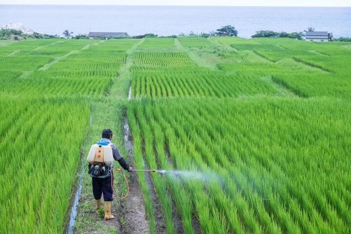 اعلام ممنوعیت خرید گندم سن زده از کشاورزان/ سم پاشی مزارع با جدیت دنبال شود