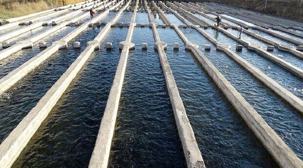 موفقیت پروژه های تحقیقاتی بهره وری آب در مزارع آبزیان