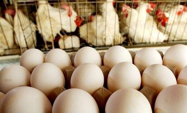 اختلاف نظر ۲ وزارتخانه در عرضه تخم مرغ