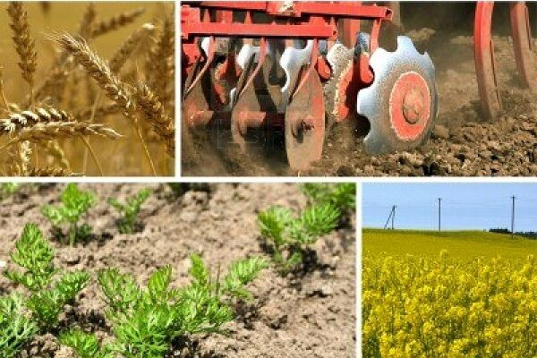 کشاورزان سیستم هدفمندی برای تولید ندارند| لزوم ارتقای سهم تحقیقات بخش کشاورزی