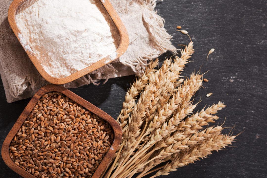 آیا گندم هم به سرنوشت مرغ دچار میشود؟
