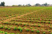 طوفان شن در جنوب کرمان خسارت سنگینی به کشاورزان وارد کرد
