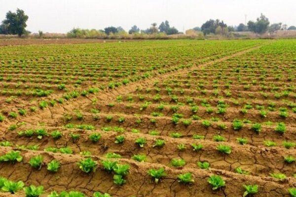 ۶۷ هزار هکتار از مزارع شرق مازندران جاده دسترسی ندارند