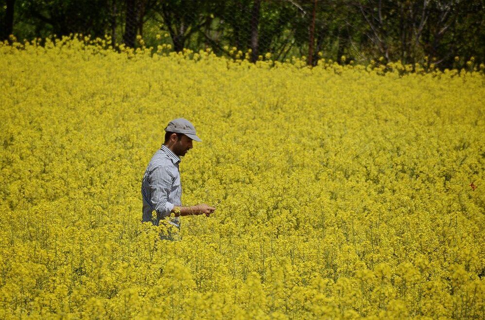 سرانه مصرف روغن ۹ کیلو بیشتر؛ سهم ایران از تولید جهانی ۰.۰۹ درصد! | تولید ۲۰۴ میلیون تنی روغن نباتی در  جهان
