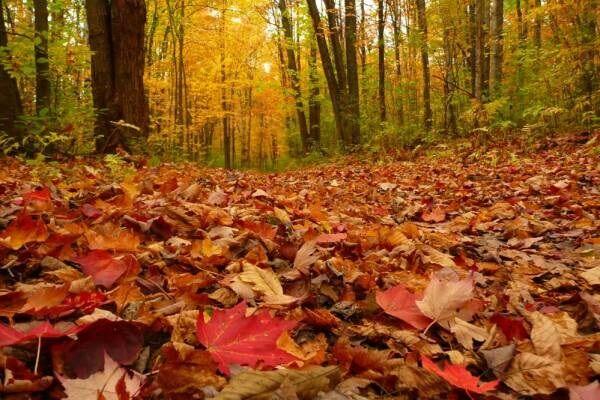 ۵ روش بازیافت برگهای پاییزی| استفاده بهینه از ضایعات درختی