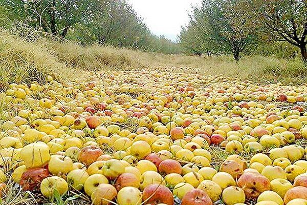 ۸۰ مرکز بهداشتی دپوی سیب در آذربایجان غربی دایر می شود