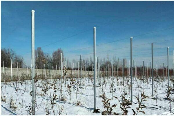اجرای طرح سایبان در سطح ۴۵۰۰ متر مربع از باغ الگویی سیب ارومیه