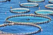 تولید ۲ هزار تن ماهی در مزارع پرورش در قفس سیمره ایلام