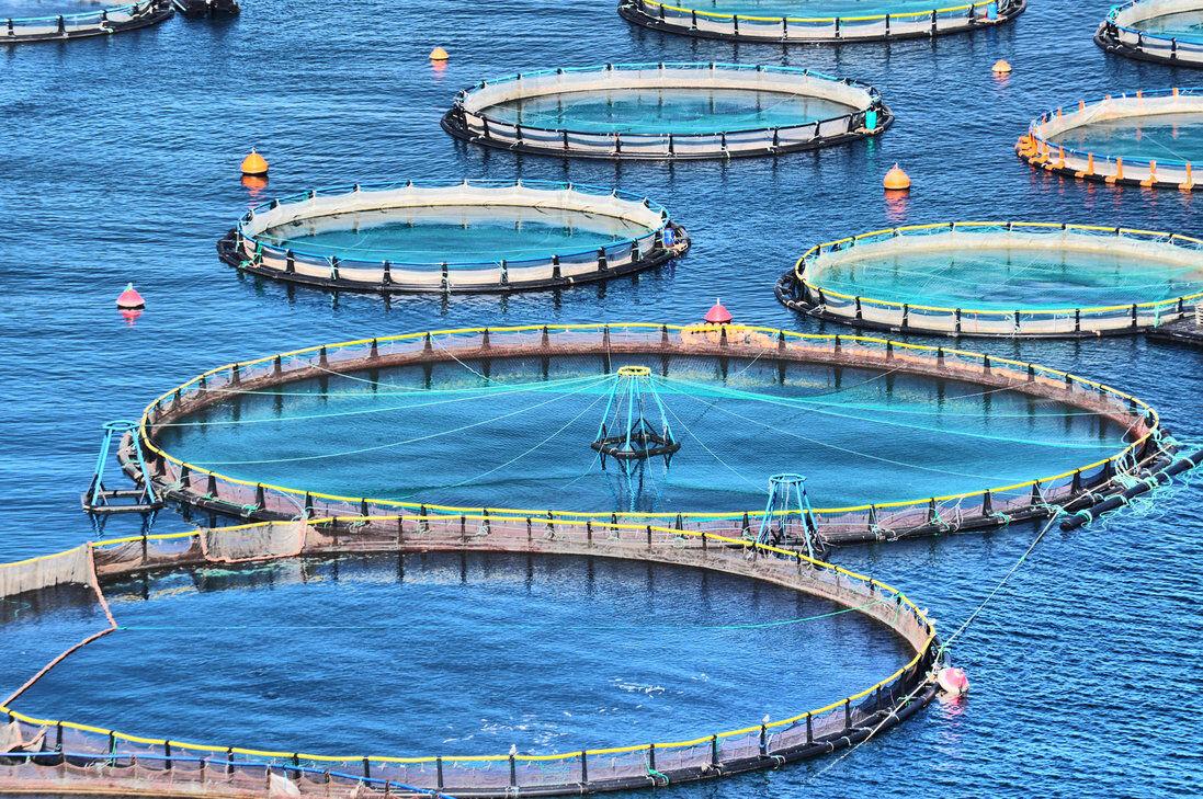 ۳۲ هزار تن ماهی در لرستان تولید میشود