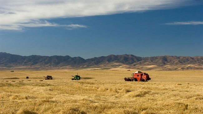 کشاورزی جنوب کرمان را نجات دهید؛ نبود صنایع تبدیلی حلقه گمشده اقتصاد