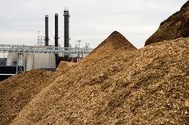 جهان با ضایعات چوبی چه میکند؟؛ پسماندهای ویژه، کلید ارتقای کیفیت کشاورزی