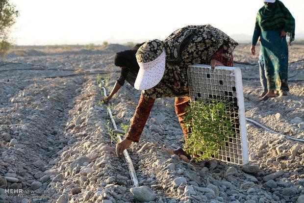 مهاجرت معکوس در گرو توانمندسازی روستاها؛ «اقتصاد» منشاء مشکلات روستایی