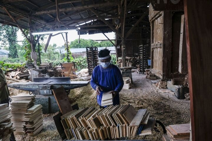 طرح زراعت چوب در ۳۰۰ هکتار از اراضی قزوین اجرا میشود