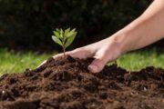 کشت گونههای گیاهی جدید و مقابله با بحران خشکسالی در همدان