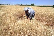 رتبه کرمان در زمینه استفاده از صندوق بیمه کشاورزان بسیار پایین است
