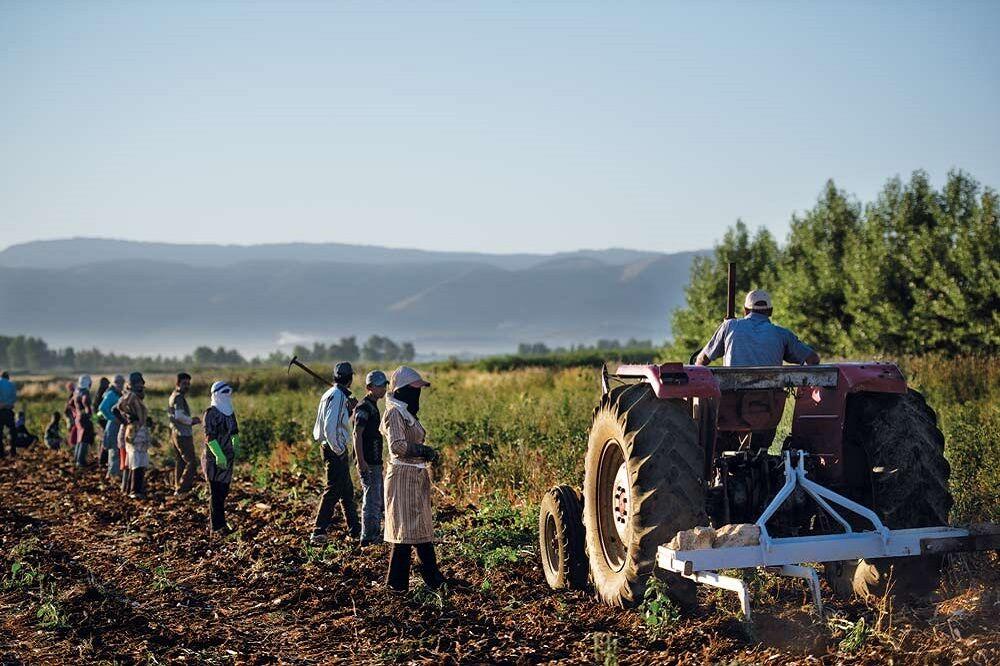 تنها ۱۵ درصد نیاز کشاورزان سوریه به بذر سالم تامین میشود