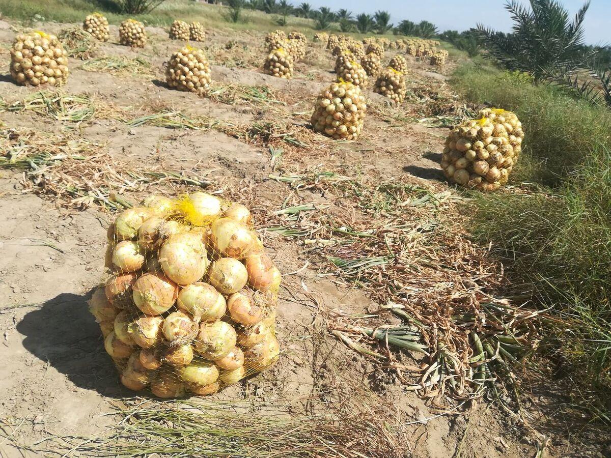 قفل صادرات به محصولات کشاورزی؛ نبود دیپلماسی اقتصادی کشاورزان را بیکار کرد