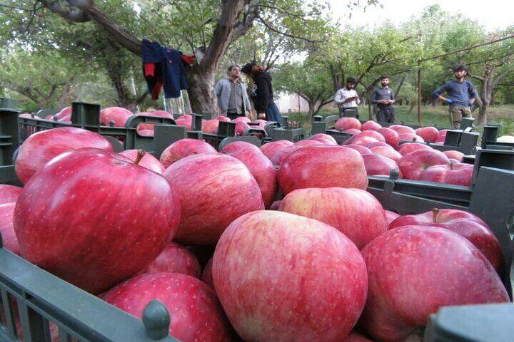 باغداری کشور با مشکل جدی روبرو است؛ ضرورت رفع موانع صادرات سیب