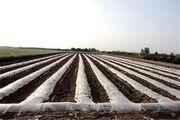 زنگ خطر کشت های زیر پلاستیک برای مزارع کشاورزی