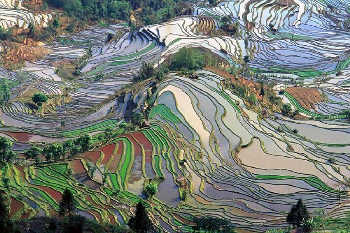مزارع برنج 3