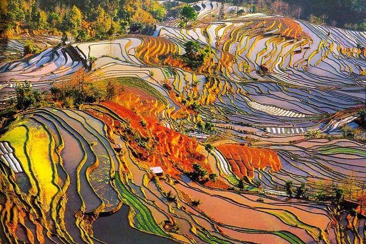 مزارع برنج 5
