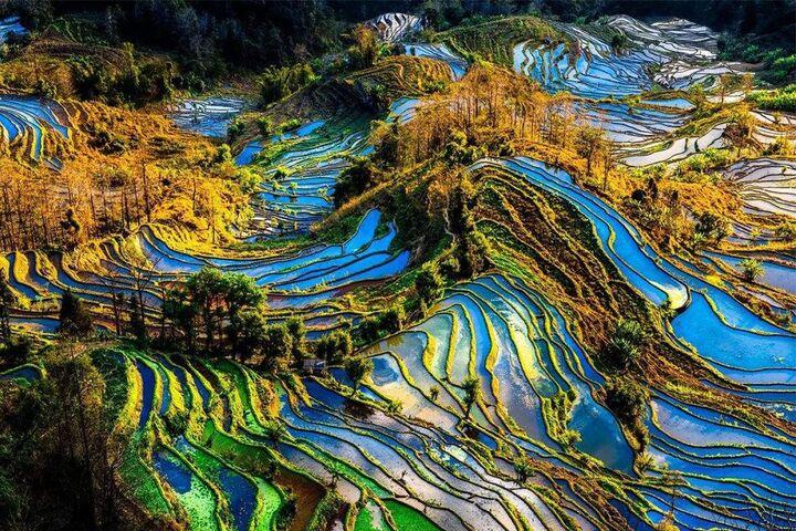مزارع برنج 7