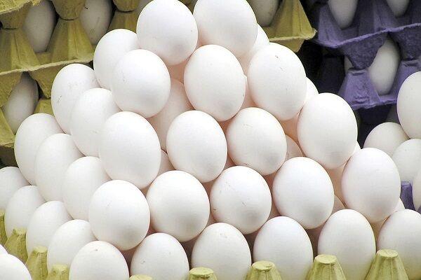 گرانی روی شانه تخممرغ نشست؛ افزایش ۲۰ درصدی قیمت در بازار