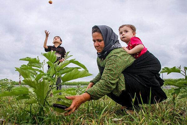 رشد ۱۰۰ درصدی فعالیت تعاونی زنان روستایی در کشور