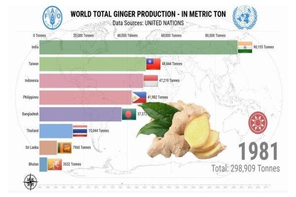 هند، برترین کشور تولیدکننده زنجبیل