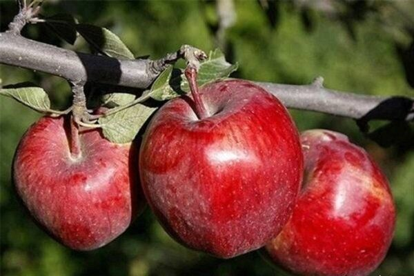 «برندسازی» حلقه مفقوده تولیدات کشاورزی؛ محصولات تولیدی به نام تهران به کام دیگران