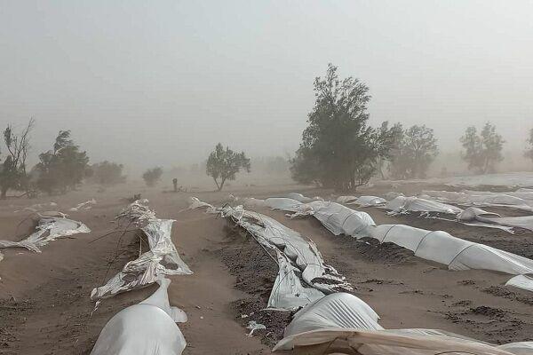 محصولات کشاورزی جنوب کرمان زیر شن مدفون شد