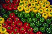 تولیدات ۴۸ واحد فلفل دلمهای در لرستان به خارج از کشور صادر میشود