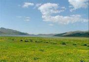 امسال ۵۰ هزار هکتار ذخیره گاه مرتعی در آذربایجان غربی شناسایی می شود