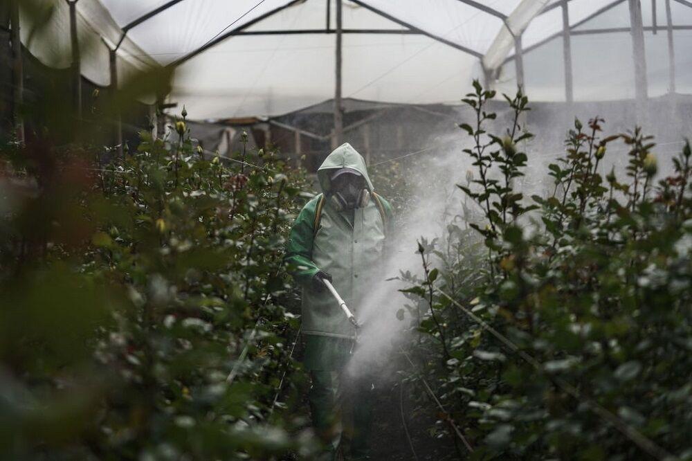 کاهش کشت گل و گیاه به دلیل شیوع کرونا
