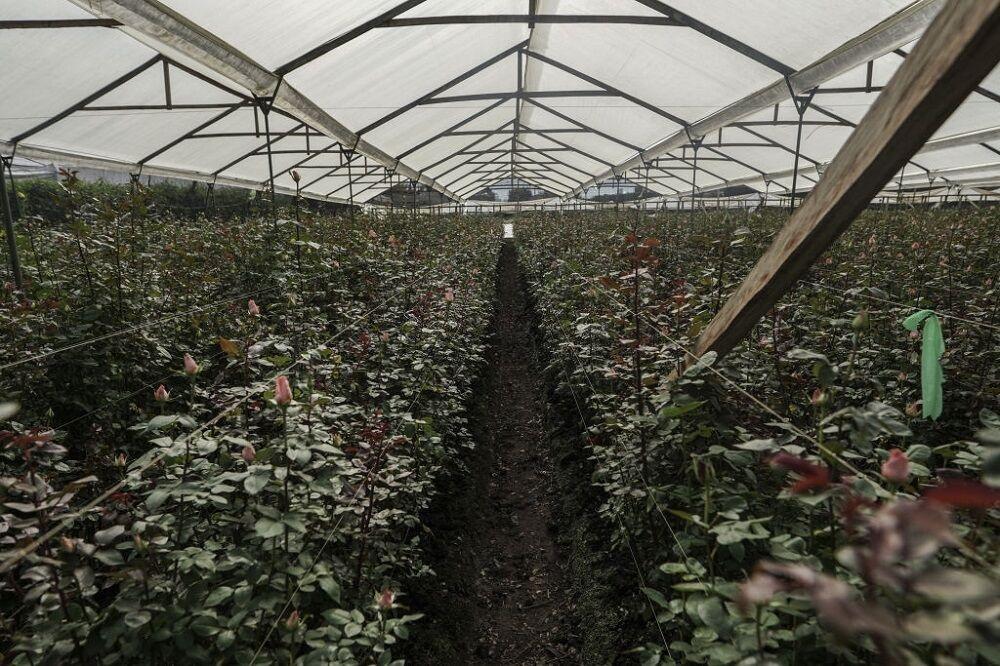 کرونا خسارت فراوانی به صنعت گل و گیاه محلات زد/ لزوم تشکیل خوشه تولید در منطقه